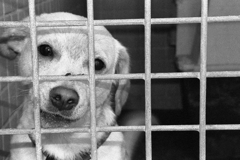 Se buscan voluntarios para el Centro de Protección Animal de San Bartolomé