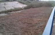 PSOE Medio Ambiente critica que se hayan retirado solamente parte de las cañas del río a su paso por Benejúzar