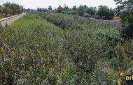 Benejúzar solicita a la CHS la limpieza del cauce del río y las ramblas en previsión de gota fría