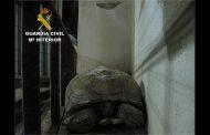 Encuentran en una carretera de Bigastro una tortuga de 40 kilos