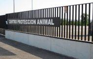 Los animales del Centro de Protección Animal quedan abandonados a su suerte