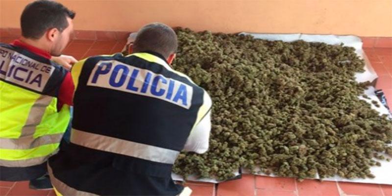 Intervienen 277 plantas de Marihuana de un cultivo ilegal en Orihuela