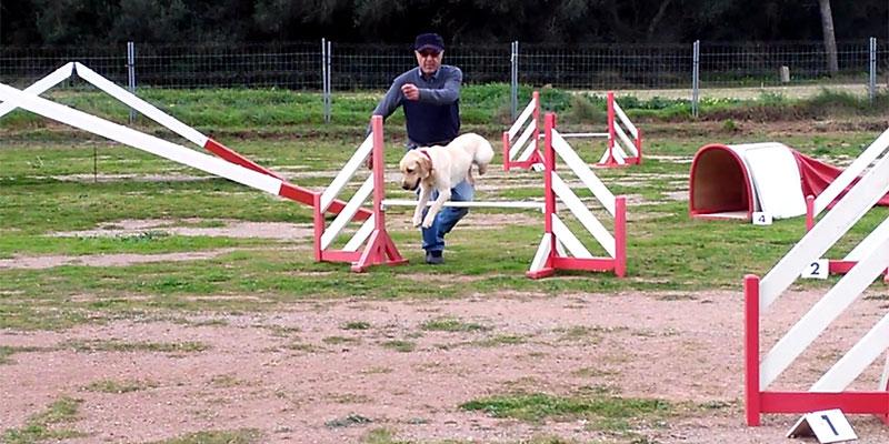 Los canes mejor adiestrados de España compiten este fin de semana en el polideportivo municipal El Molino en la final de Agility