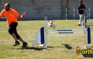 Dani Menéndez gana la final del Campeonato de España de Agility con su perra Xhila