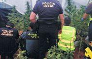 Desmantelada una plantación de marihuana en San Bartolomé